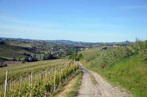 Vines Langhe path walk map